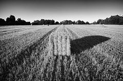 Hay shadow (jimmedia) Tags: