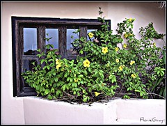 1828350117_c994dbf805_o (gray.florie) Tags: flowers window mexico yucatan floriegray appenninosettentrionalealpinatura florencegray floriegrayflorencetomasulograytomasulofloriegrayfloriegraycom