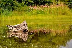 DSC_5157 (claymore2211) Tags: reflection water river log shore winner challengeyou friendlychallenges cyunanimous superherochallenges herowinner ultraherowinner