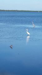 Weaver park birds (tiffanycsteinke) Tags: florida dunedin fl dunedinflorida dunedinfl delightfuldunedin