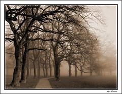 28-Le chemin qui mne vers toi !... (gio.dino3) Tags: