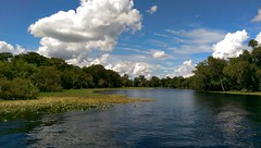 St John's River scene #Florida #LoveFL #pureflorida #nature #landscape
