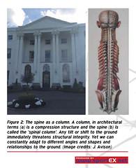 42DY31_2 (sportEX journals) Tags: rehabilitation massagetherapy sportex sportsinjury sportsmassage sportstherapy sportexdynamics biotensegrity