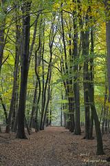 Spaziergang im Wald (joli_2009) Tags: forest wald bume wandern weg spaziergang spazieren