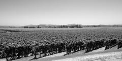 Anderson Valley California (lennycarl08) Tags: california northerncalifornia vineyard wine sonoma grapes sonomacounty winecountry