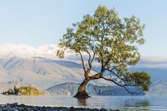Lake tree (Ian@NZFlickr) Tags: wanaka tree fractalius overlay low pov otago nz
