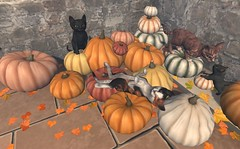 JIAN Pumpkin Collection Kitty Edition (FLF 9/22) ([JIAN]) Tags: secondlife mesh kitty kittens kitten cat cats kitties animals pets cute fall autumn sale newrelease jian