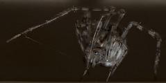 Spider (GAVIN AYRE) Tags: gavinayre spider nikond700 belmont nsw australia