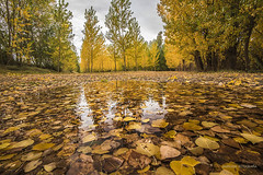 Riberas del carrin (Anpegom fotografa) Tags: otoo ribera carrin cerrato palencia hojas