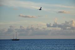 Peacefully (RMNBZ) Tags: boat sea beach summer blue sky clouds sailing ship bird seagull bateau voilier plage t ciel bleu mer ocan mouette nuages crpuscule dusk