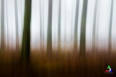 _MG_4693-20 (Diamantino Dias) Tags: portugal paisagem arlivre rvores serenidade serra