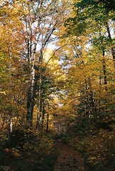 Spruce Mountain Trail (Nsharp17) Tags: nikon nikonfe film 35mm kodak ektar ektar100 trail sprucemountain vermont yellow fall autumn foliage