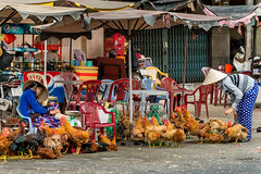 Chickens on a Street, Cholon, Ho Chi Minh City (takasphoto.com) Tags: asean animal animalia asia ave bird birding chicken chinesenewyear cholon cochinchina domaćakokoš fögler gallusgallusdomesticus giĕ haushuhn hochiminh hochiminhcity hochiminhstadt hôchiminhville høns indochina kana kip kiêé kuradomowa nature oiseau outdoor photography preynokor primavera redjunglefowl saigon saigonhochiminhcity saïgon season southeastasia southvietnam spring street streetphotography sàigòn tet thànhphốhồchíminh thànhphốsàigòn thànhphốtrựcthuộctrungương time transportation travel travelphotography trip viaje vietnam vietnamas vietnamesenewyear viêtnam việtnam wild wildlife coq fowl galinha gallina gallo galo poule 鳥 鳥類 鸡 胡志明市 越南 旅行 東南アジア