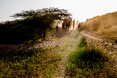 L1003362.jpg (Bharat Valia) Tags: pushkarfair bharatvalia desert rajasthanportraits bharatvaliagmailcom sheperd pushkarimages pushkarmela festivalsofindia camel pushkarcamelfair pushkar