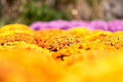 IMG_9606 (venkat.loka) Tags: 2016 asheville fall northcarolina october outdoor biltmore day