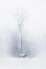 In the snow (ppaschka) Tags: schnee snow weis white schwarz black sw bw haus baum tree canon 700d winter