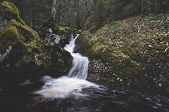 Untitled (shimizacken) Tags: ifttt 500px norway norge ottery otterya skorstad nordtrndelag namdalen shimi zacken shimizacken fuji xt1 16mm nature forest norwegianwood