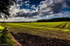 Nothing Like A Good Walk! (BGDL) Tags: lightroomcc nikond7000 bgdl landscape afsnikkor18105mm13556g farmland countryside rural auchincruive ayrshire 7daysofshooting week16 ifihadtimeid texturetuesday