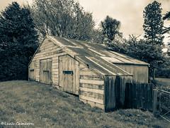 Triple door rustic (leah-nz) Tags: barn shed rural farm decay rust monochrome blackandwhite outdoors