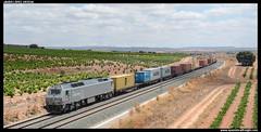 TECO en Alpera (javier-lopez) Tags: ffcc railway train tren trenes adif acciona mercancías teco contenedor contenedores 333 3333 renfe amf rosco laagrss transfesa pmc sgs ermewa pmmc lfgss maersk msc mediterraneanshippingco vicálvaroclasificación silla alpera 15072016