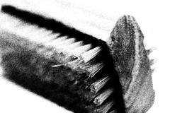 nail brush (Landesfahrer) Tags: nagelbürste sauber kunst fotokünstlerjürgencordt
