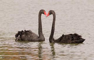 Black Swans in Explore