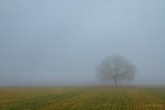 En tiempo atenuado (AvideCai) Tags: avidecai niebla arbol paisaje tamron2470