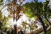Osaka Castle Park (nak.viognier) Tags: osakacastlepark 大阪城公園 olympusepl3 lumixgfisheye8mmf35
