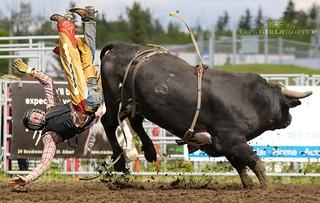 Not My Rodeo, Not My Bull
