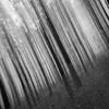 run. (markhortonphotography) Tags: intentionalcameramovement blur markhortonphotography woods mist trunk bw blackwhite deepcut surrey macro tree thatmacroguy scythe mono surreyheath monochrome death fog blackandwhite icm verticalpanning