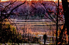 Sundown At Wildwing Lake (Wes Iversen) Tags: brighton fencefriday hff kensingtonmetropark michigan milford tamron150600mm autumn autumncolor fence fences lakes marshes nature people railings sunsets trees women painterly
