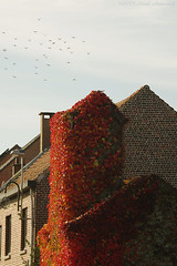 Tervuren.Belgium (Natali Antonovich) Tags: tervuren belgium belgie belgique architecture pensiveautumn autumn