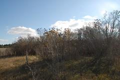 DSG_7391 Panorama 4 of 6 at Photo Post #2 (Greying_Geezer) Tags: 2016 hazelbird ncc natureconservancyofcanada hamiltontownship ort hiking naturereserves hazelbirdnr2