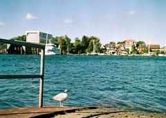 nach Arnis (Drte Krell) Tags: meinfilmlab wwwmeinfilmlabde cn200 m645 sekor schlei schleswigholstein colour analog film