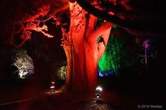 DSC04116 (Twareg) Tags: 2016 aboretum bpw enchanted forest westonbirt bathphotowalk gloucestershire england handheld night nightshot
