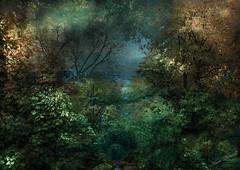 Echappée mer.. (jeanfenechpictures) Tags: escape sea lumière light sombre dark forêt forest vue vieux ciel sky ruisseau stream textures colors couleurs arbres trees couchant sunset jeanfenech