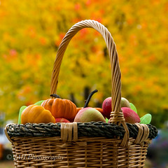 Happy Thanksgiving!!! (jah32) Tags: thanksgiving apples apple pumpkins minipumpkins basket bokeh fall fallcolours fallcolors fallcolor fallcolour autumn frontporch onthefrontporch