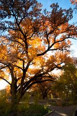 Backlit Leaves (MTD Photos) Tags: newmexico autumn backlight colors fall fallcolors leaves mattdomonkos nature seasons sky trees