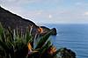"Madeira: ""the Island of flowers"" (Behappyaveiro) Tags: madeiraisland islandofmadeira theislandofflowers portugal oceanoatlântico atlanticocean miradourodoguindaste strelitzia theguindasteviewpoint santana flowers faial birdofparadiseflower blue sea sky clouds infinity loveontherocks estrelícia volcanicisland strelitziareginae"
