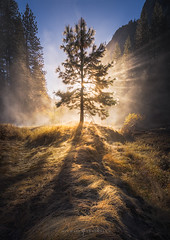 valleyoflight960 (DJANDYW.COM & DJANDYW.TV AKA ANDREW WILLARD) Tags: california chrisp cold dew flare fog forest godrays landscape leadingline light lightrays mist morning rays shadow sunrise sunstar tree treeoflight trees valley yosemite yosemitenationalpark yosemitevalley stockphotography