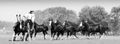 Ms argentino (Eduardo Amorim) Tags: horses horse southamerica argentina criollo caballo cheval caballos cavalos pferde herd cavalli cavallo cavalo gauchos pferd pampa hest hevonen chevaux gaucho  amricadosul hst gacho  campero amriquedusud provinciadebuenosaires  gachos  sudamrica sanantoniodeareco suramrica areco sdamerika gregge crioulo troupeau caballoscriollos herde criollos  tropillas  pampaargentina camperos americadelsud tropilhas tropilla  crioulos cavalocrioulo americameridionale tropilha caballocriollo campeiros campeiro eduardoamorim cavaloscrioulos pampaargentino
