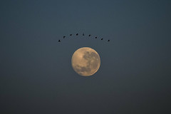 The Eye of God (emiliokuffer) Tags: moon eye birds ojo luna timing perihelion supermoon perihelio superluna moonperihelion periheliolunar