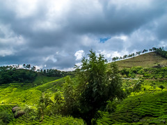 Crowned by the trees (Arrested Sunlight) Tags: india mist beautiful rain clouds garden drive tour scenic roadtrip kerala resort route plantation hillstation westernghats munnar teaestate tealeaves refresh nilgirirange