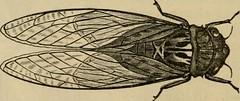 Anglų lietuvių žodynas. Žodis cinnamon bark reiškia cinamono žievės lietuviškai.