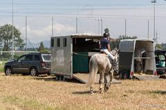 DSC07986_s (AndiP66) Tags: horse macro sports sport schweiz switzerland sony august sp di if alpha tamron concours pferd equestrian f28 canton solothurn ld horsejumping 70200mm wettbewerb 2014 springen 1august kanton springreiten subingen andreaspeters pferdespringen 77m2 wasseramt a77ii ilca77m2 77ii 77markii slta77ii 1augustspringen