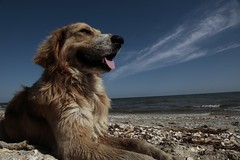 The dog and its Black Sea (Cristian tefnescu) Tags: sea sky dog animals meer hund bluw fav25 hganimalsonly