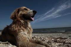 The dog and its Black Sea (Cristian Ştefănescu) Tags: sea sky dog animals meer hund bluw fav25 hganimalsonly