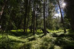 Woods (chicone81) Tags: trees sky sun tree green nature woods nikon notturna trentino bosco tokina116 d5100