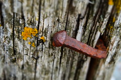 nail (MattGriff76) Tags: wood nature moss iron nail