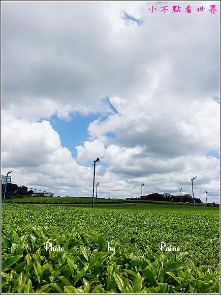 濟州島innisfree館 綠茶博物館 (58).JPG